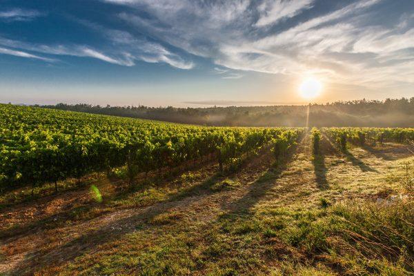 Dit zijn drie belangrijke wijnlanden!